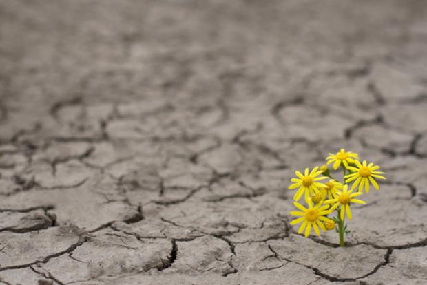 klimawandel klimapolitik klimaschutz