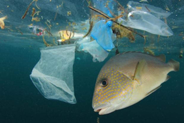 europa-politik institut-fuer-europaeische-umweltpolitik natur europaeische-kommission spanien naturschutz plastik