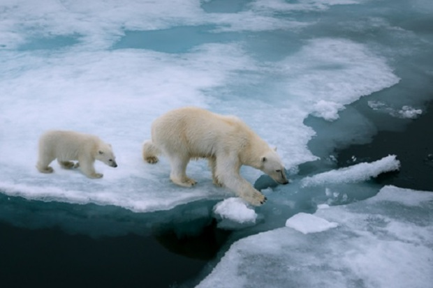 die-gruenen umweltschutz umweltpolitik erderwaermung naturschutz naturkatastrophe