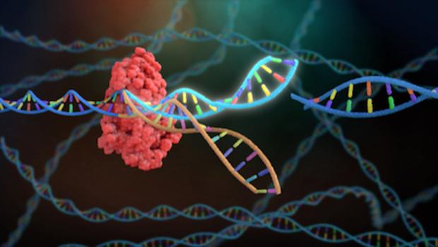 keimbahntherapie CRISPR/Cas9 keimbahn körperzelle keimzelle gentherapie
