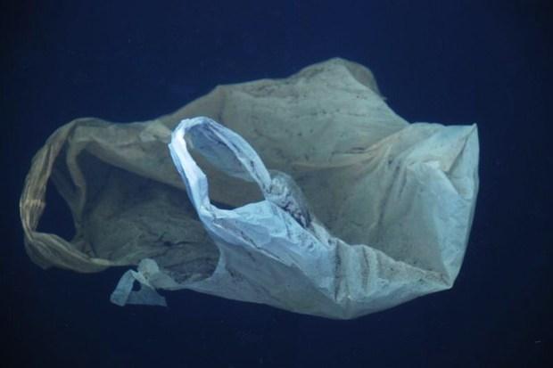 ökologie Plastikmüll
