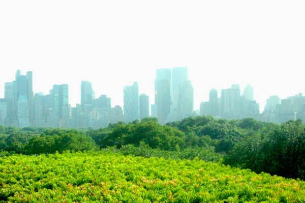 new-york natur stadtentwicklung megacity