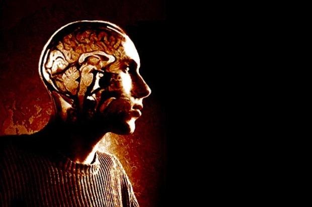 sexualitaet psychologie gehirn evolution