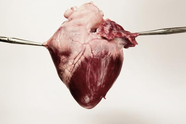 gesellschaft ethik tod organspende